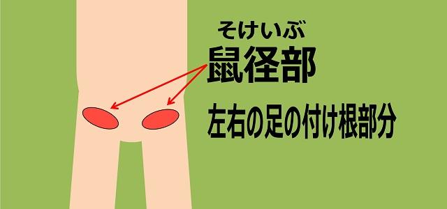 鼠径部(そけいぶ)の図解